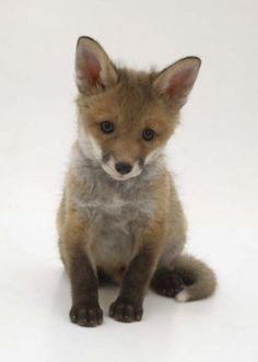 carinha de Katy   baby fox