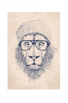 Cool Lion - Fine Art Print