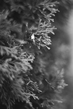 Aj Photography, Dandelion, Celestial, Flowers, Plants, Pictures, Outdoor, Photos, Outdoors