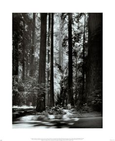 Love this Ansel Adams photograph. The detail, the immensity of the trees, the gorgeous lighting. I loved that he'd wait hours, even days, for the right light in which to take the photo of a particular scene. That's patience and dedication to one's art.