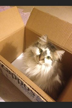 Cat in the box.
