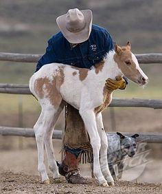 Paint foal.