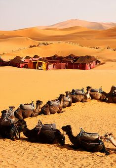 Preparing to sleep in the desert. Sahara desert Morocco 2010 by mich_obrien, via Flickr