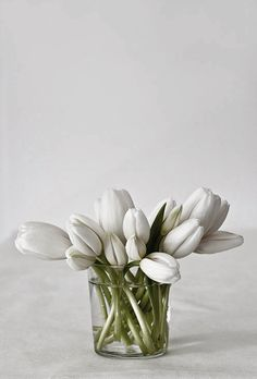 DISPLAY: A clear glass cylinder vase is a charming receptacle for white tulips, keeping the display simple enabling the beauty of the flowers to be showcased.