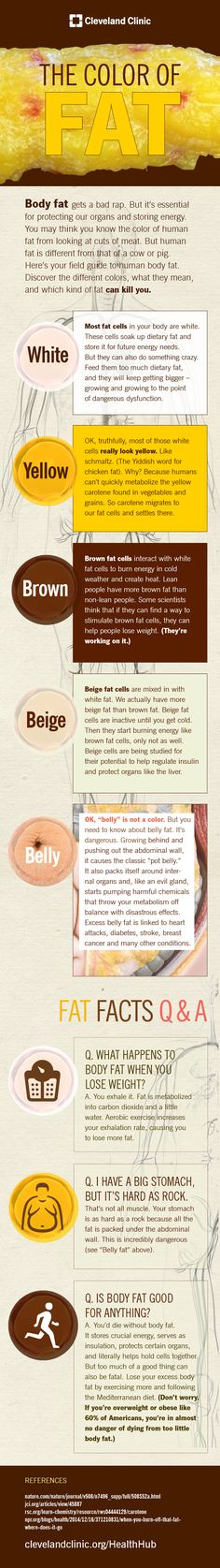 5 different types of body fat and how they help and harm your health. #bodyfat #diet #infographic
