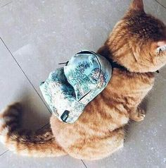 A cat backpack! http://ift.tt/2dTIybX
