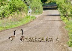 Ungerleider Brattleboro Vermont, Kangaroo, Animals, Baby Bjorn, Animales, Animaux, Animal, Animais