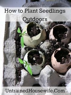 133 Amazing DIY Gardening Tips & Projects from Real Gardeners
