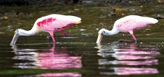 Visite Ilha Comprida - Fotos e Videos