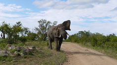 Adventure in the Kruger National Park • Where The Heart Is Visit: www.wheretheheartis.co.za
