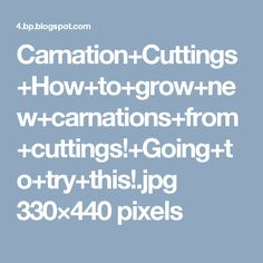 Carnation+Cuttings+How+to+grow+new+carnations+from+cuttings!+Going+to+try+this!.jpg 330×440 pixels