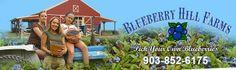 5 Hours from Fredericksburg - Blueberries blackberries Texa blueberry farm farms Pick your own, Pick 'n Edom Edom, TX Home