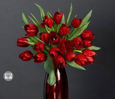 Red,Tulip,Arrangement