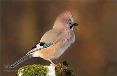 bird by amrowetz #nature #mothernature #travel #traveling #vacation #visiting #trip #holiday #tourism #tourist #photooftheday #amazing #picoftheday