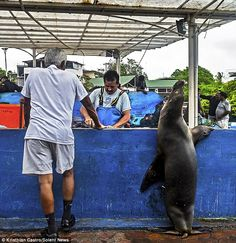 This Super Cute Sea Lion Patiently Waited In Line For Some Delicious Fresh Fish. Animal Pictures, Cute Pictures, Random Pictures, Critters 3, Dump A Day, Animal Antics, Mammals, Wildlife, Super Cute