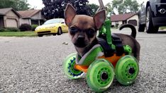 3-D printing helps disabled Chihuahua get rolling with new doggie cart - Turbo Roo!