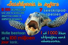 Image result for infografika oor diere Afrikaans, Homeschool, Van, Classroom, Teacher, Activities, Education, Learning, Words
