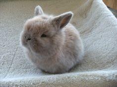 bunny, how cute!!!