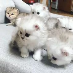 Nov 2019 - Cute Baby Cats Newborn Kitties Find Amazing Hoodies for Cat lovers on our shop! Cute Baby Cats, Funny Cute Cats, Cute Cat Gif, Cute Cats And Kittens, Cute Funny Animals, Cute Baby Animals, Cool Cats, Kittens Cutest, Kitty Cats