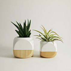 New Larger Size - Our hand painted wood colorblock planters are designed for air plants, small succulents and cacti. The 3 wood planter will add a nice modern accent to any indoor space. The planting hole is approximately 1 7/8 deep by 2 wide. (This listing is for one planter - larger size - plant not included)  Product includes: △ one wood colorblock planter (larger size)  △ plant not included ▲ Cube dimensions: approximately 3  ▲ No drainage hole. Indoor use only  ▲ Origin: USA…