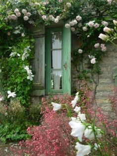 Rose & Clematis around pretty window with faded green shutters. Letting it all grow Wildly!