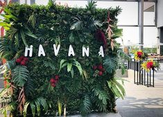 Our tropical foliage wall at the entrance of Havanna Nights Party, Havanna Party, Havana Nights Party Theme, Cuban Party Theme, Party Themes, Party Ideas, Birthday Parties, Pool Parties, Kid Parties