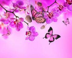 Картинка Фиолетовый
