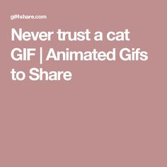 Never trust a cat GIF | Animated Gifs to Share