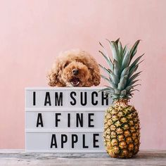 A reminder incase today has been a 'ruff' Monday .....@ps.ny . . . . #puppies #puppiesofinstagram #puppiesofig #quotes #naturalbeauty #naturalskincare #luxuryskincare #greenliving #greenbeauty #greenskincare #organicbeauty #skincareaddict #skincarejunkie #skincare #organicskincare #ecobeauty #cleanliving #cleanskincare #greenbeautyrevolution #greenbeautybloggers #nontoxicskincare #nontoxicbeauty #selfcare #artofpure #wellness #beautyiswellness