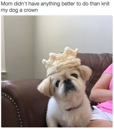This mighty ruler with the most glorious crown in all the land. | 23 Dogs Who Will Make You A Happier Person