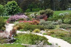 A high country native garden at Cloudy Hill - GardenDrum Australian Native Garden, Native Plants, Flourish, Garden Landscaping, Nativity, Garden Design, Landscape, Country, Outdoor Decor