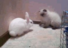 Hey, hey! Don't bully rabbits