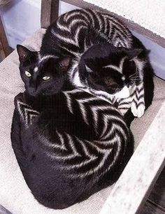Creative Grooming Design Ideas for Stylish Furry Pets cats with unusual patterns, stripes, creative pet grooming ideas Cute Baby Animals, Animals And Pets, Funny Animals, Beautiful Cats, Animals Beautiful, Beautiful Pictures, Unusual Animals, Unusual Pets, Unique Pets