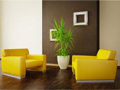 Surround a dark accent wall such as French Roast (SW 6069) with neutrals and bright colors.