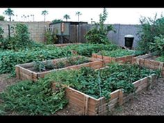 Watch later -> Secrets to an organic garden.