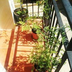 Mi balcón en mi pueblo