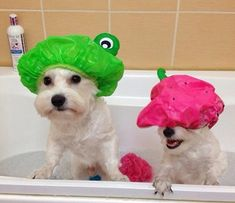 Dog Bath Time Funnies http://www.dfordog.co.uk/blog/dog-bath-time-fun.html