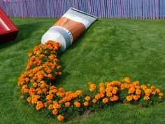 A tube of orange paint leaks marigold in a public park in France