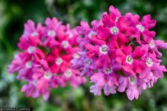 Reposting @phart.co: #phart #flowers #flower #petal #petals #nature #beautiful #love #pretty #plants #blossom #sopretty #spring #summer #flowerstagram #flowersofinstagram #flowerstyles_gf #flowerslovers #flowerporn #botanical #floral #florals #insta_pick_blossom #flowermagic #instablooms #bloom #blooms #botanical #floweroftheday  Flores de muchos colores.  PH: @camila.c.v