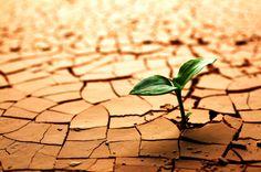 Réchauffement climatique et alimentation... http://www.humanite-biodiversite.fr/article/rechauffement-et-catastrophe-alimentaire-le-discours-s-elargit