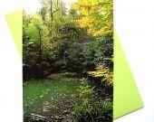 Une mare dans la forêt carte postale et son enveloppe. http://www.alittlemarket.com/cartes/une_mare_dans_la_foret_carte_postale_et_son_enveloppe_-4814375.html