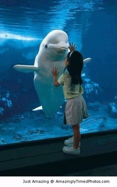 Belugas like making new friends | Amazingly Timed Photos