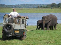 Jeep safaris to view the elephants of Kaudulla National Park in central Sri Lanka are popular. South Africa Safari, Continents, Kenya, Sri Lanka, Jeep, National Parks, Asia, Elephants, Travel