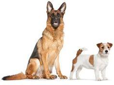 Enciclopedia del cane: le razze di cani dalla A alla Z.