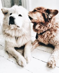 puppy care tips Natural Remedies Cute Puppies, Cute Dogs, Dogs And Puppies, Doggies, Adorable Babies, Funny Dogs, Fluffy Puppies, Silly Dogs, Baby Dogs
