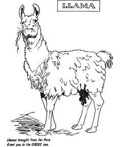 zoo animal coloring page llama exhibit