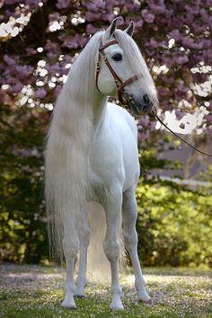 Most Beautiful Horses, All The Pretty Horses, Animals Beautiful, Cute Animals, Pet Dogs, Dog Cat, Pets, Majestic Horse, Cute Horses