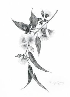29 ideas for flower tattoo ideas sleeve style - 29 ideas for flower tattoo ideas sleeve style # tattoo - # for Flower Tattoo Designs, Flower Tattoos, Leaf Tattoos, Small Tattoos, Sleeve Tattoos, Australian Wildflowers, Australian Native Flowers, Australian Plants, Illustration Botanique