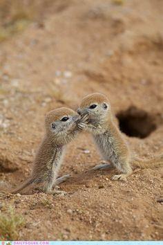 Baby Round Tail Squirrels
