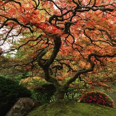 Reconnect with nature. Photo of Portland's Japenese Garden by Roman Johnston - Oregon